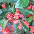 雨上がり・赤い花 …菜園15時34分