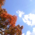 紅葉と空 … 岩手公園 9時55分