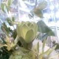 朝・白い花 … 午前10時21分