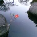 小さな花 … 16時29分
