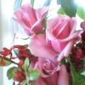 薔薇に朝の日が射して