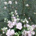 春の花 … 1月28日18時