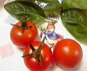 ミニトマト初収穫… 7月14<br />  日19時34<br />  分
