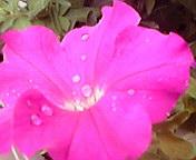 花・雨粒をのせて…午前7<br />  時27分