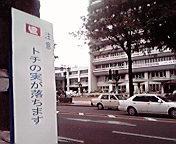 立て看板…岩手県庁前8月2<br />  8日11時50<br />  分