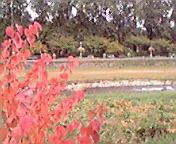 盛岡中津川沿い… 10月8<br />  日午前1<br />  1時21分
