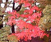 紅葉…岩手公園 10<br />  月25日14<br />  時11分