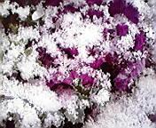 雪…午前9時1<br />  1分