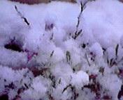 雪の朝… (<br />  サザンクロス)<br />  午前7時0<br />  5分