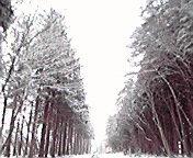小岩井付近2… 1月12<br />  日午前9時0<br />  1分