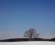 一本の樹…小岩井付近 1月<br />  18日午前9<br />  時38分