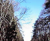 木々の間に空澄みて…小岩井付近1月2<br />  4日午前8時<br />  58分