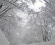 雪舞う…八甲田2月1<br />  9日午前10<br />  時38分