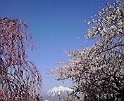 岩木山…弘前公園 4<br />  月29日午前<br />  8時17分