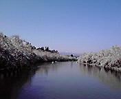 水濠…弘前公園4<br />  月29日午前<br />  8時47分