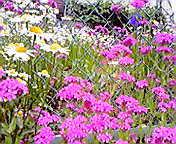 街角の花…大通6<br />  月3日午前1<br />  1時54分