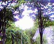 木々の間から…岩手公園前午前10時55<br />  分