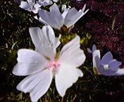 白い花…紫波 6月<br />  14日14時45<br />  分