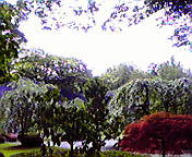 岩手公園にて…午前9<br />  時58分