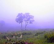 あの日の景色…谷川岳天神平 7月<br />  18日9時48<br />  分
