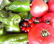 収穫トマト・ピーマン…紫波 <br />  8月29日