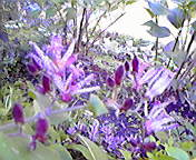 ホトトギス…盛岡内丸 10月15<br />  日午前9時5<br />  7分