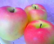 林檎…むつ