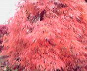 紅葉…紫波午後15時48<br />  分
