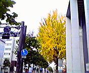 紅葉・イチョウ…北銀本店前 11<br />  月2日午前9<br />  時38分