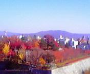 紅葉…岩手公園 11<br />  月6日12<br />  時34分