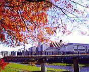 盛岡毘沙門橋… 11月18<br />  日午前9<br />  時41分