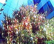 クリスマスツリー… 11月20<br />  日15時32<br />  分