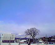 一本の木…仙北町 <br />  1月23日13<br />  時34分