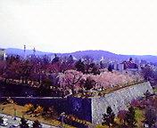 やっと桜…岩手公園 5月2<br />  日午前10時<br />  10分