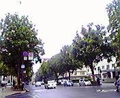 雨の街路樹…盛岡中央通 5月<br />  24日10時16<br />  分