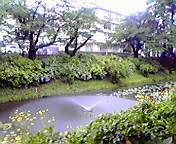 噴水…盛岡内丸 7<br />  月31日12<br />  時41分