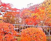 紅葉…岩手公園 11<br />  月16日午前<br />  11時34分