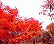 紅葉2…岩手公園 11<br />  月16日