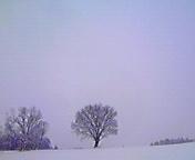 小岩井付近… 1月9<br />  日午前10時<br />  38分