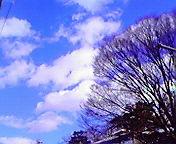 空と雲と樹…岩手公園前 1月<br />  21日午後12<br />  時07分