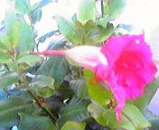 開花… 8<br />  月6日