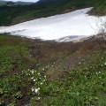 焼石岳 … 残雪とミズバショウ