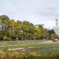 岩手公園ポプラ並木 … 10時45分