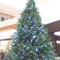 クリスマスツリー …イオン11月26日11時43分