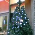 クリスマスツリー…大通11月28日15時53分
