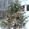 MOSSビル駐車場のクリスマスツリー …14時