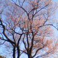 桜 … 岩手公園 18時01分