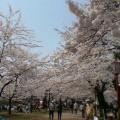お花見日和 … 岩手公園12時21分