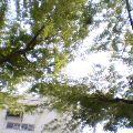 新緑Ⅲ … 盛岡菜園 14時40分